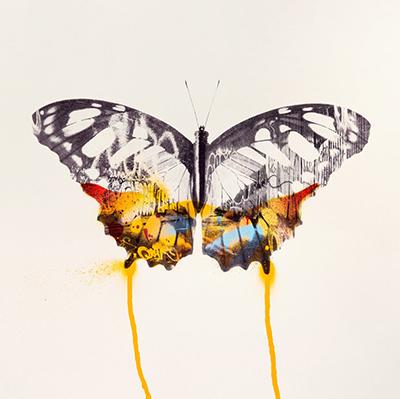 Orange_Graffiti_Butterfly